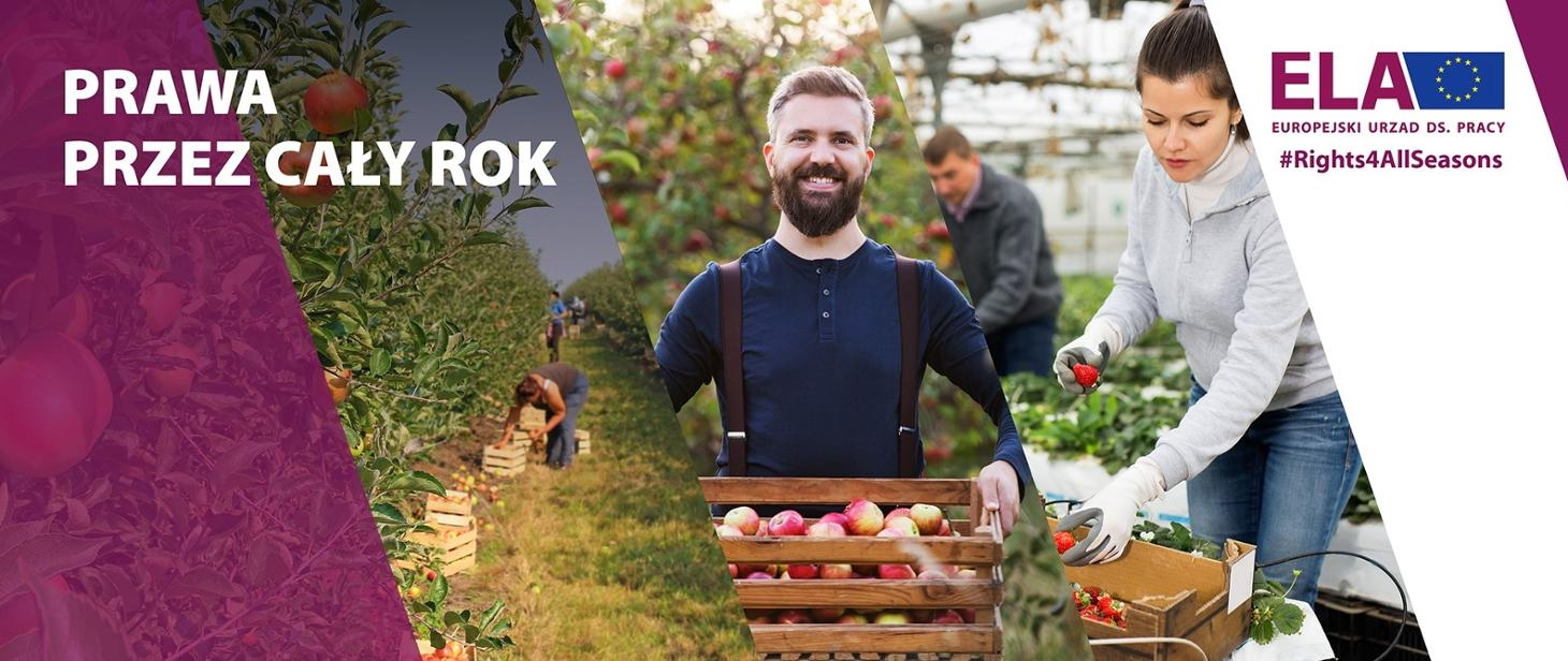 Kampania informacyjna dla pracowników sezonowych w UE